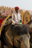 Elephant and Mahout at Amber Fort — Stock Photo