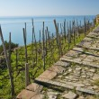 Stock Photo: Stone Track Seaview