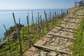 Stone Track Seaview — Zdjęcie stockowe