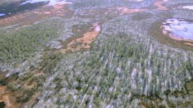 Tundra taiga — Stock Video