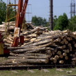 Stock Video: Lumber