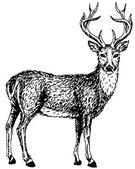 Ciervos salvajes — Vector de stock