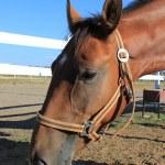 Horse — Stock Photo #14916037