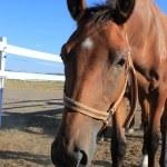 Horse — Stock Photo #14916041