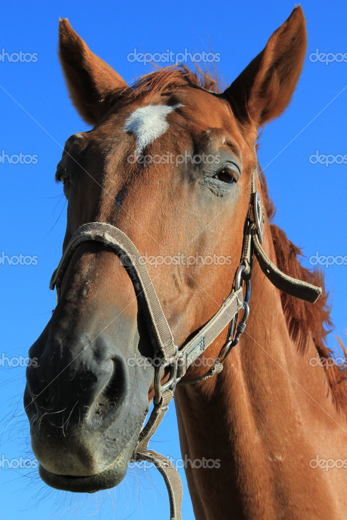 Horse animal — Stock Photo #14915863