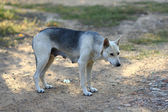 Sad homeless dog — Stock Photo