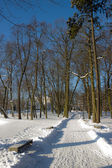 City park covered with snow — Stock Photo
