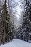 Karla kaplı şehir parkı — Stok fotoğraf