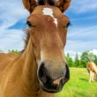 Stock Photo: Funny horse