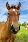 面白い馬 — ストック写真