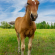 Horse on a green grass — Stock Photo #27433153