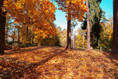 Colorful autumn leaves in park — Stock Photo
