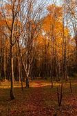 Autumn scene in a city park — Stock Photo