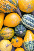 Pumpkins on a wooden table , backrounds — Foto Stock