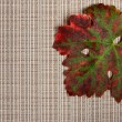 Stock Photo: Autumnal leaf on textured place mat