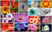 Flower Collage — Stock Photo