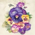 Watercolor Flora Collection: Viola Tricolor — Stock Photo #13394495