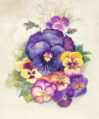 Watercolor Flora Collection: Viola Tricolor — Stock Photo