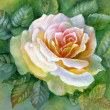 Stock Photo: WATERCOLOR FLOWER-ROSE