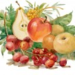 Watercolor Flora Collection: Fruits — Stock Photo #13967902