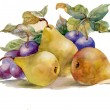 Watercolor painting: pears and plums — Stock Photo #13967904