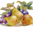 Watercolor painting: pears and plums - Stock Photo
