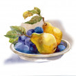 Watercolor painting: pears and plum — Stock Photo #13967907