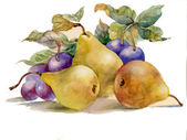 Watercolor painting: pears and plums — Stock Photo