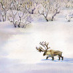 Deer in the snow — Stock Photo