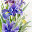 Watercolor Flower Collection: Irises — Stock Photo #23139970