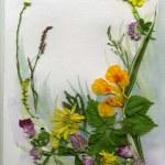 Herbarium — Stock Photo