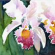 Stock Photo: Watercolor Flower Collection: Orchids