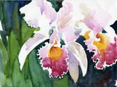 Watercolor Flower Collection: Orchids — Stock Photo