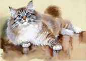 Watercolor Animal Collection: Cat — Stock Photo