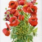 Poppy flowers, watercolor illustration — Stock Photo #30870329