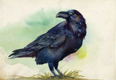 Black raven watercolor painting — Stock Photo