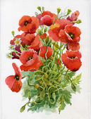 Poppy flowers, watercolor illustration — Stock Photo