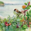 Watercolor sparrow on dog-rose — Stock Photo