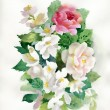 Watercolor roses bouquet — Stock Photo