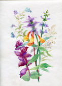 Watercolor wildflowers and grasses — 图库照片