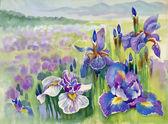 Beautiful iris meadow in watercolor — Stock Photo