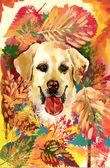 Cane d'autunno. — Foto Stock