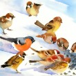 Birds eat the seeds on the snow — Stock Photo