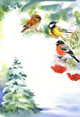 Two birds and bullfinch on the snowy branch — Stock Photo
