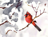 Red bird on a branch with snow — Stock Photo