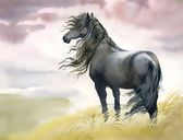 Black horse in a field — Stock Photo