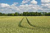 Agriculture in Bavaria Germany — Stock Photo