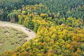 Forest with tractor in Saxony Switzerland — Stock Photo