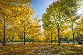 Parco a dresda — Foto Stock