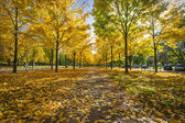 Small Park in Dresden Germany — Stock Photo